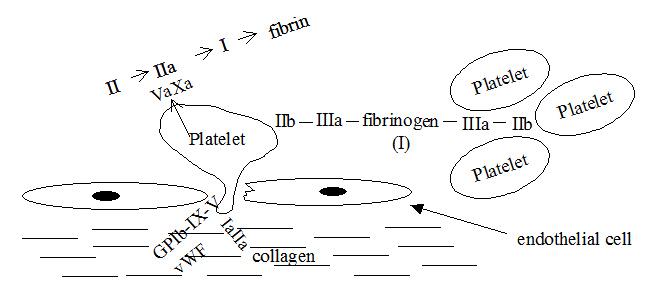 formation_plateletplug_1.jpg
