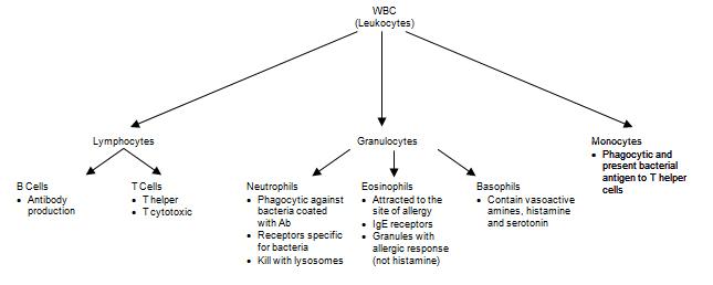 Hemostasis & White Blood Cell Disorders - UCSD Lab Medicine